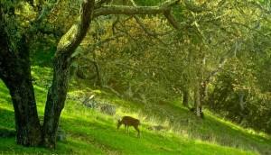 Deer In Morning Light - Version 2_2