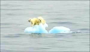 Polar Bear solent2 996877a